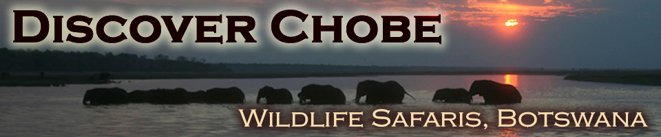 Discover Chobe Wildlife Safaris
